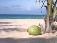 coconut-on-the-beach-1410034